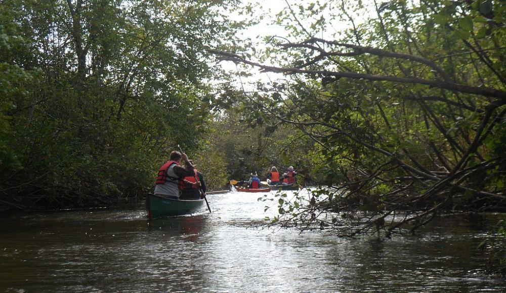 Upper shallow river